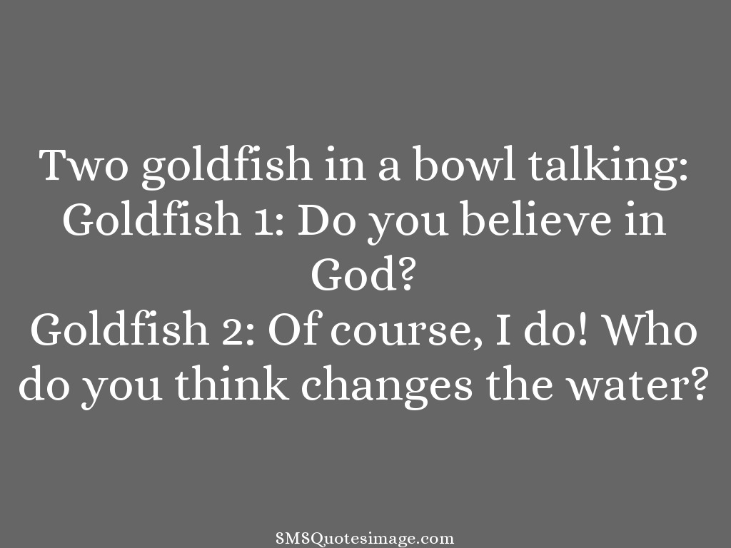 Funny Two goldfish in a bowl talking