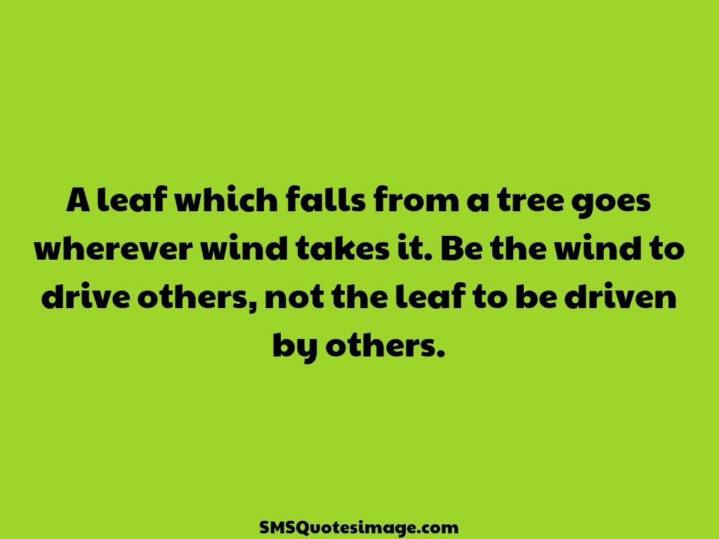 Wise A leaf which falls from a tree